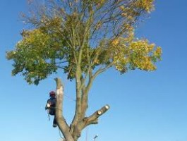 Tree Surgeons Nichols and Sons