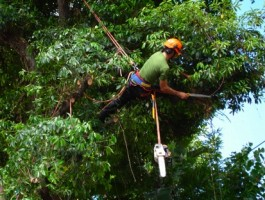 Tree Pruning Sutton