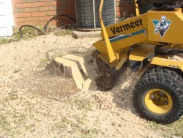Stump Removal Sutton
