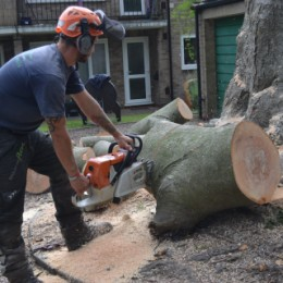 Tree Felling in Surrey