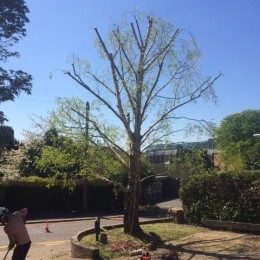 Tree Pruning in Surrey