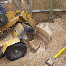 Stump Grinding in Sutton