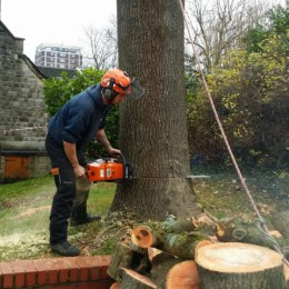 Surrey Tree Felling