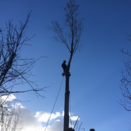 Tree surgeons in Sutton