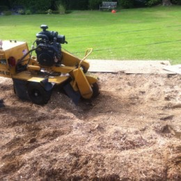 Stump Grinding in Surrey