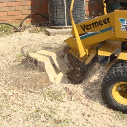 Stump Grinding in Worcester Park