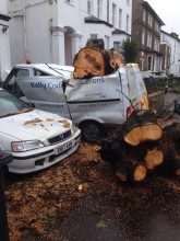 Emergency Tree Work Carshalton