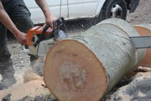 Tree Felling in Morden