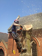 Tree Felling New Malden