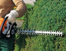 Hedge Trimming Carshalton