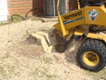 Stump Grinding Worcester Park