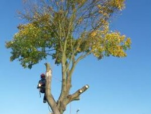 Tree Felling Sutton