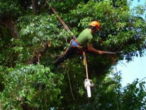 Tree Pruning Sutton